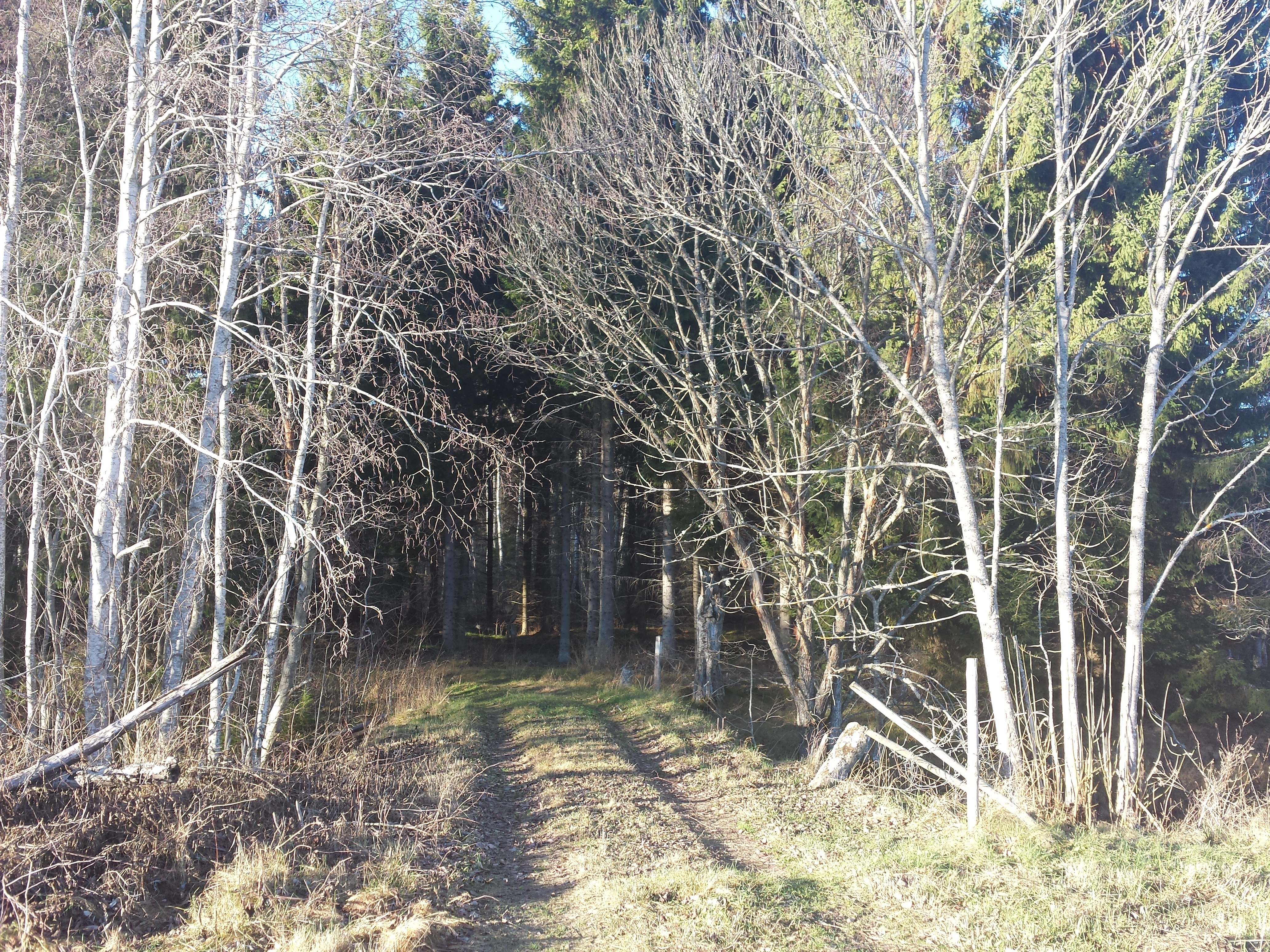 Skogsvägen in till Tullstugan där Karl Åbom föddes