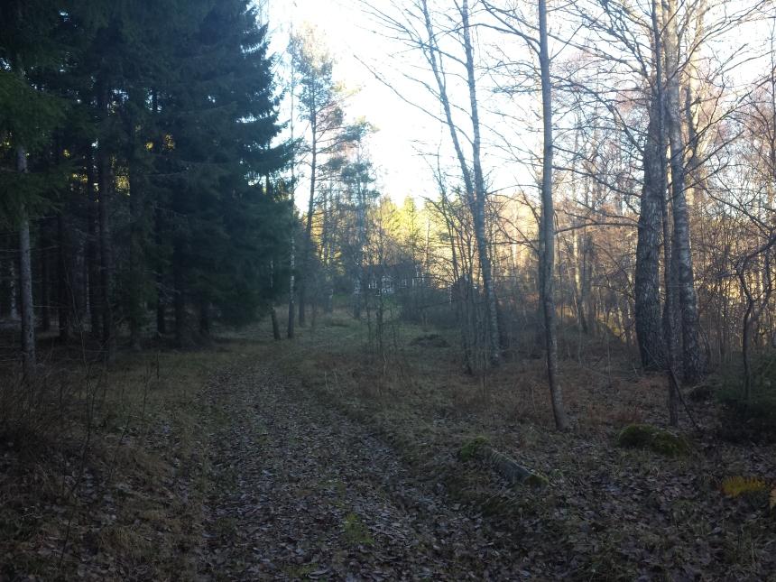 Skogsvägen in till Tullstugan